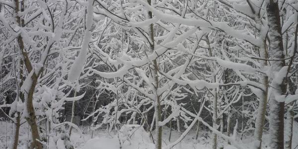Winter (Eichberg)