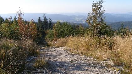 Auf den letzten Metern des Anstiegs zum Dreisessel gestattet die lichte Vegetation weite Ausblicke.