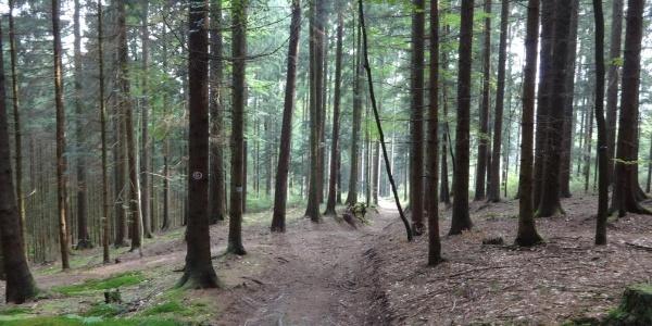 Waldweg kurz nach Stallwang