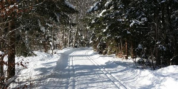 Nach dem Einstieg führt die Loipe durch einen kleinen Wald