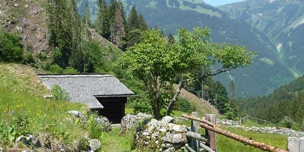 Montafoner Steinschaf und Kräuterwanderung