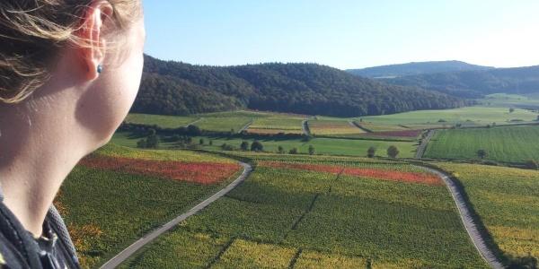Weinberge am Frankenblick