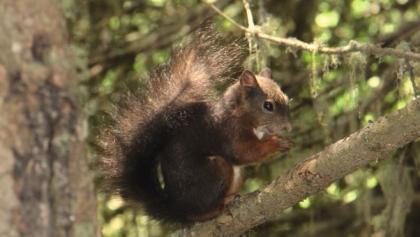 Des écureuils sur le sentier