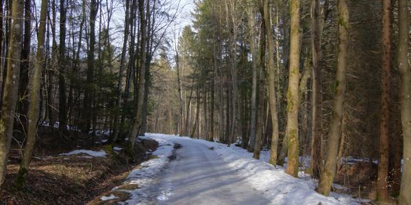 Der Weg zum Deixlfurter See zeigt sich noch sehr winterlich