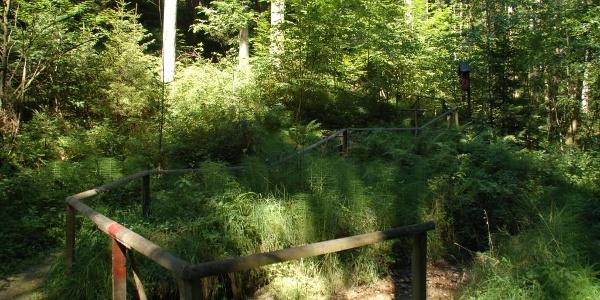 Panoramaweg Weg im Wald