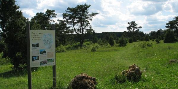 Wanderung auf dem Rosskopfsteig - Magerrasenflächen in Riedenburg