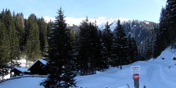 Die Almflächen der Weirichalm sind erreicht. Hinter der Baumgruppe wechselt man auf die freien Wiesen.