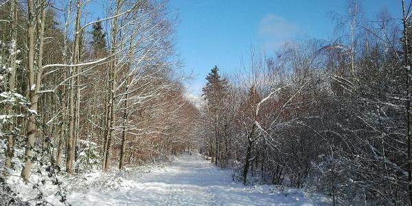 Waldbronnweg