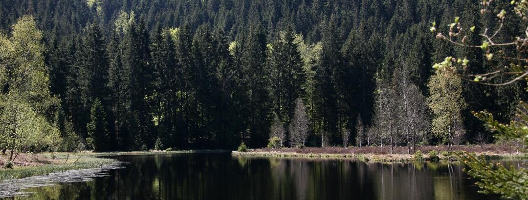 Romantischer Elbachsee in Baiersbronn im Schwarzwald