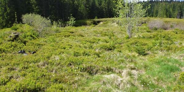 Naturschutzgebiet Langenbach-Trubelsbach