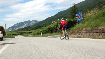 Colline Avisiane. Es wird in Richtung San Michele all'Adige geradelt