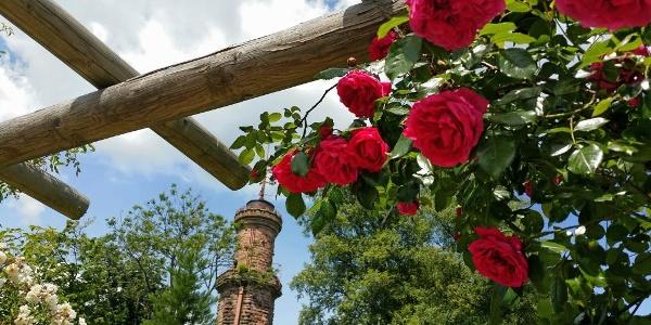Der Friedrichsturm zur Rosenblüte