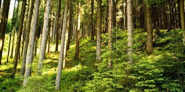 Durch Wald und Wiesen