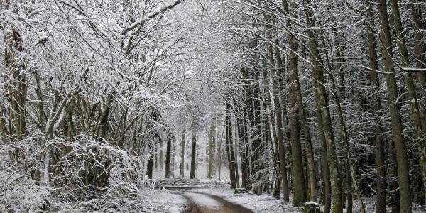 Weg von der Veringer Hütte zu den Erzgruben im Winter