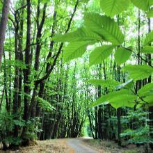 Kühle Maroniwälder auf der Höhe