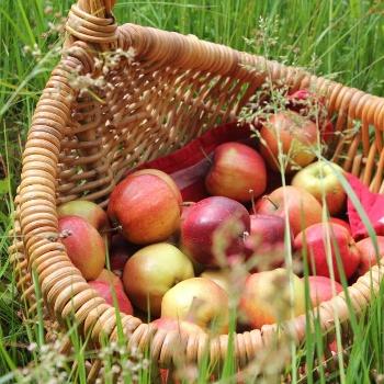 Apfelkorb in der Wiese