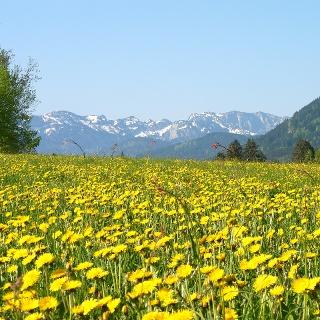 Die Kräuter-Erlebnis-Region Tölzer Land