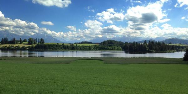 Blick zum Ammergebirge mit Sameisterweiher
