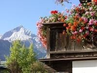 Geranienbalkon mit Blick auf die Alpspitze