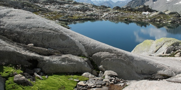 grüne Moose zwischen den Felsen