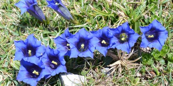Mit kleinen botanischen Highlights am Wegrand darf gerechnet werden.