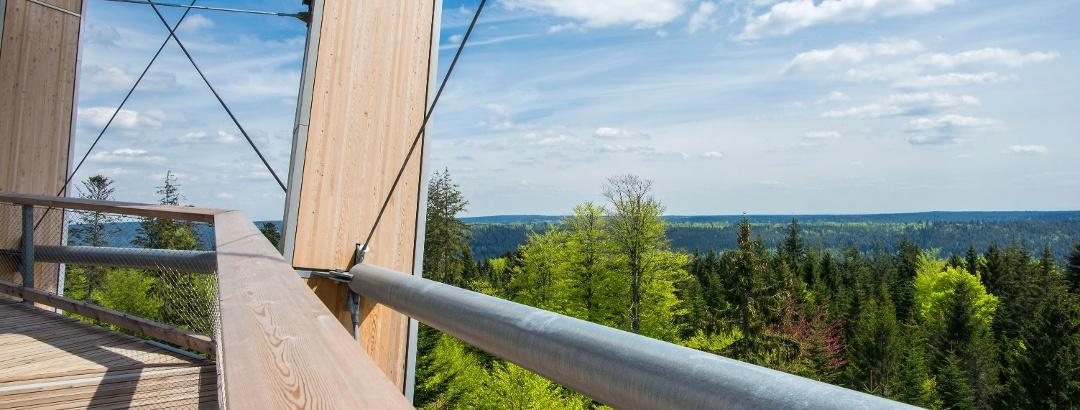 Blick vom Baumwipfelpfadturm im Nordschwarzwald