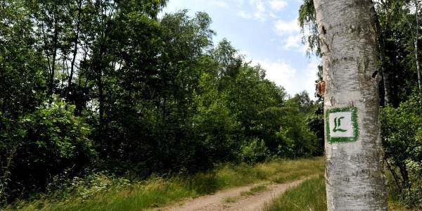 Luther Trail between Löbnitz and Bad Düben