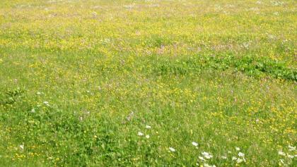 Blumenwiese bei Dötra