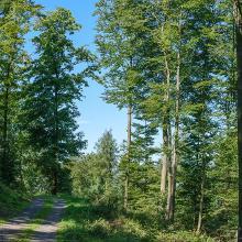Herrliches Waldstück am höchsten Punkt.