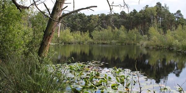 Seerosenbedeckter Moorsee