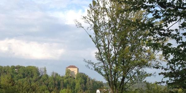 Blick zur Saldenburg