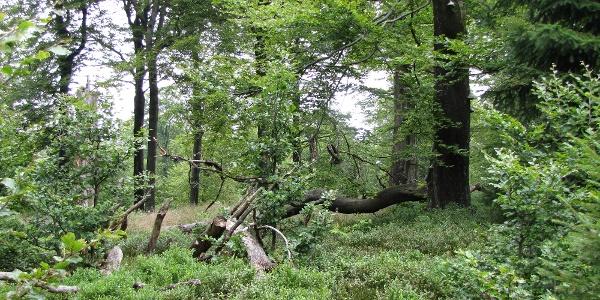 Wälder auf der Hunau