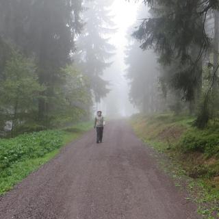 Unterwegs nach Fehrenbach