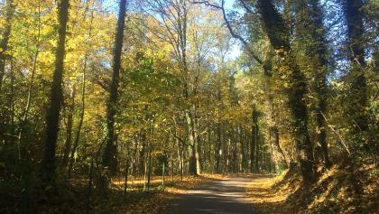 Herbstimpression auf dem Weg nach Noppenberg