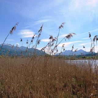 Chiemsee- und Alpenblick