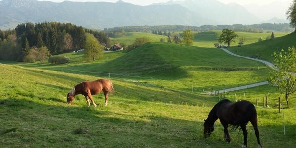 Fernwanderweg - Meditationsweg, 3. Etappe - Blick vom Aidlinger Höhenweg