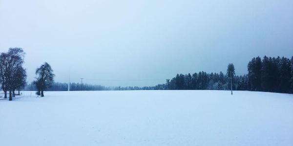 Schneefeld am Waldrand beim Startpunkt