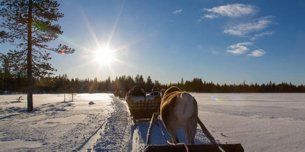 Take a reindeer sleigh through the beautiful landscape of Lapland