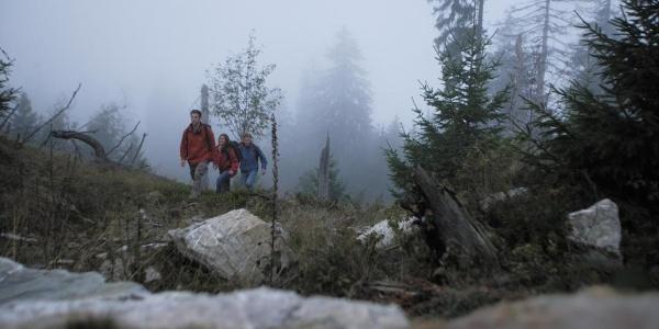 Wanderer im Nebel