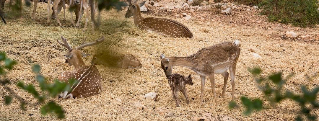 חיות בר בפארק הכרמל