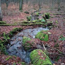 Sehr viel Wasser im Wald
