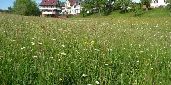Wiese in Überberg