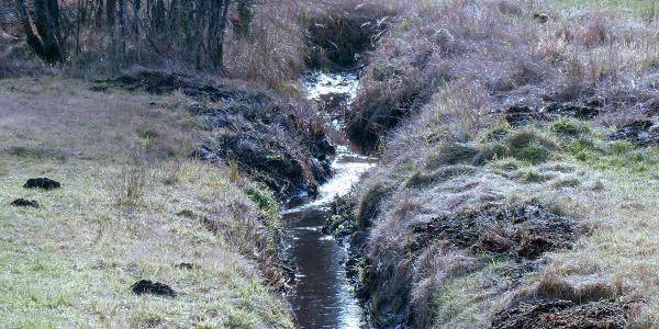 Wassergraben im Filz