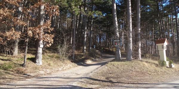 Nach einigen Metern auf Asphalt links wieder hinein in den Wald