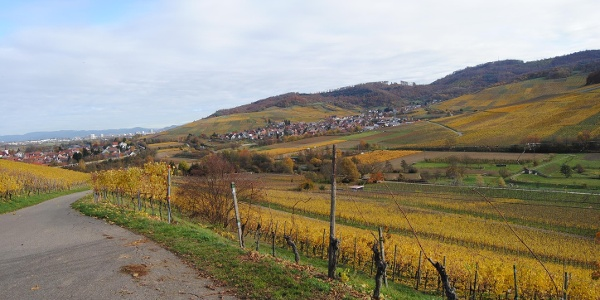 Blick auf Freiburg bei Ebnet