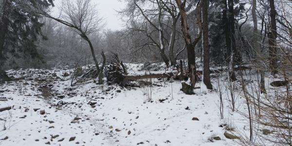 Am Ringwall im Winter