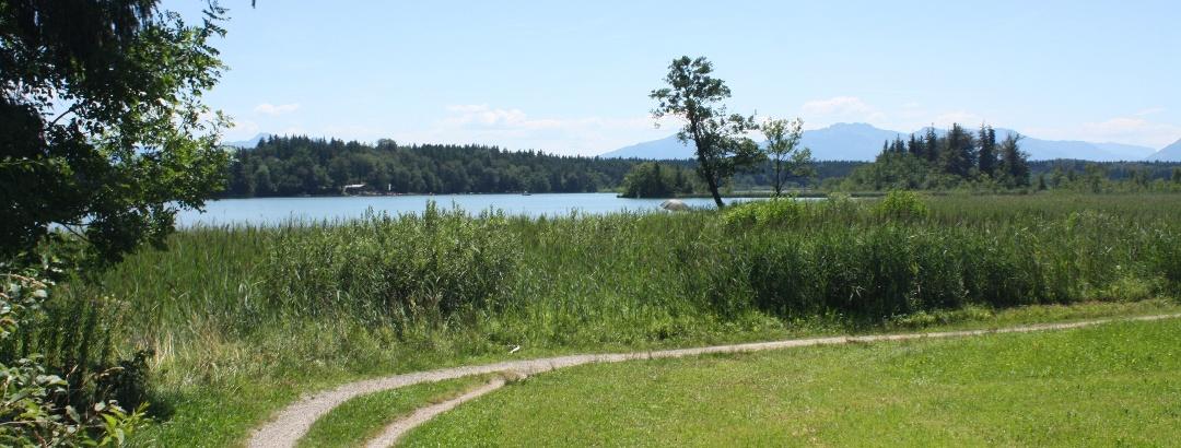 Hartsee