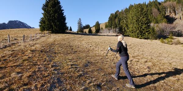 Der Wiesenweg nach dem Bergheim