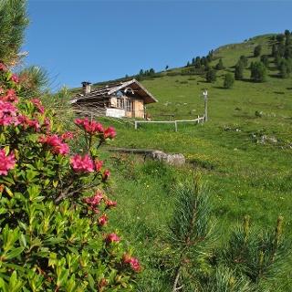 Armentagiola hut
