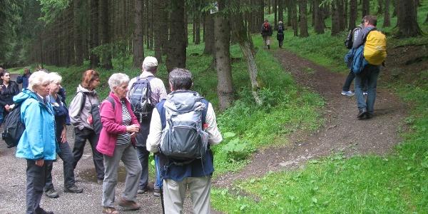 Aufstieg zur Königsburg bei Königshütte